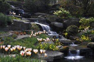 el-jardin-botanico-de-nueva-york