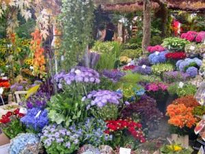 Fauna-y-flora-en-Holanda