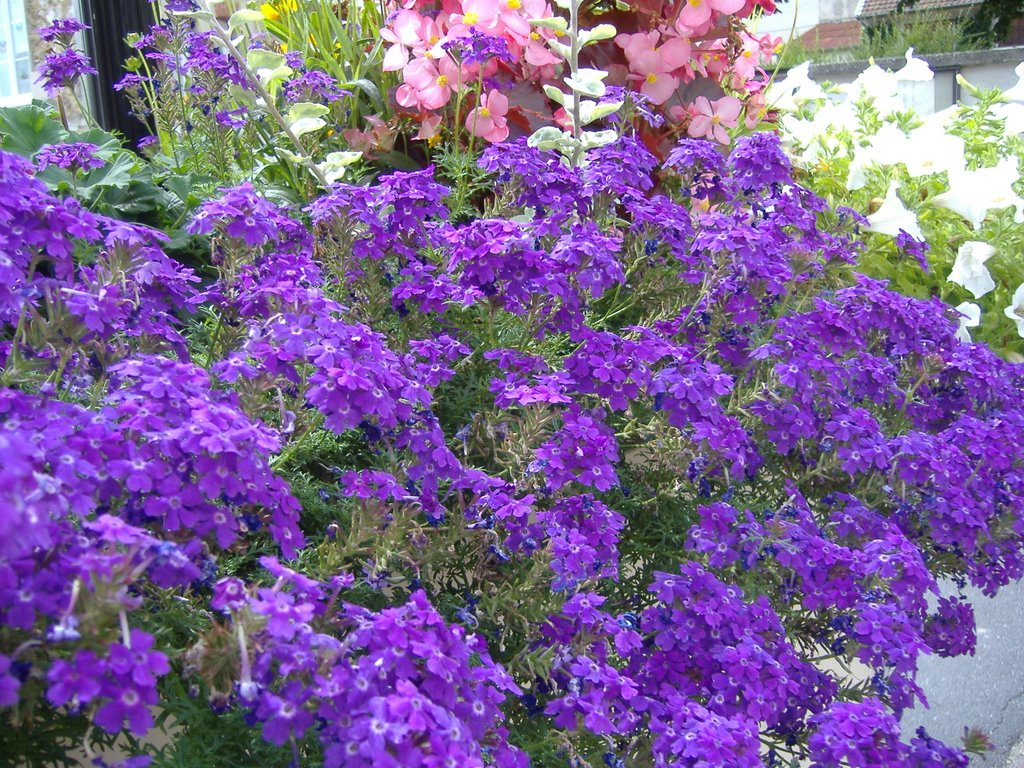 Flora de Francia – creciendoentreflores