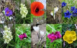 flora italia