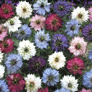 flores bélgica