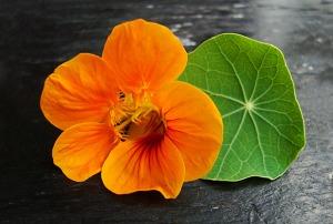 flores comestibles campanilla