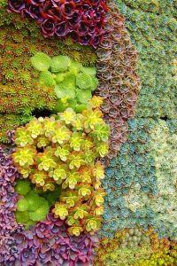 flores verticales suculentas