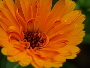 flores_comestibles_01