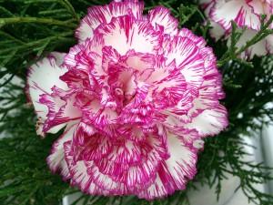 flores_comestibles_02