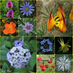 flores_del_botnico-640x640x80