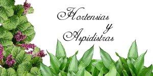 hortensias-y-aspidistras