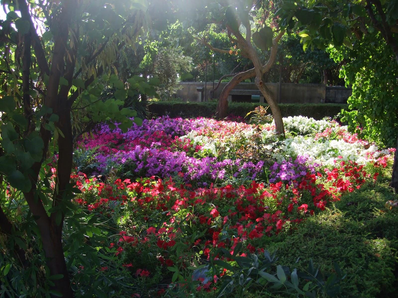Viajando sin ir muy lejos xii flora y artesan a con flores de salamanca creciendoentreflores - Jardin de calisto y melibea salamanca ...