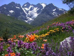 jardin-alpino