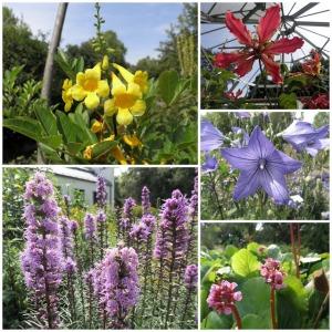 jardín botánico leipzig