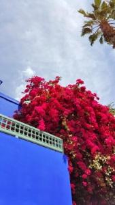 Jardin Majorelle Marrakech Morocco Elle Field Yves Saint Laurent