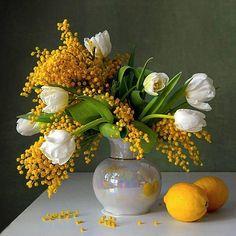 mimosa bodegón