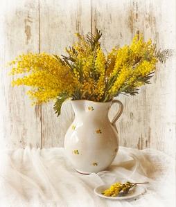 mimosa jarra