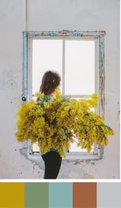 mimosa ventana