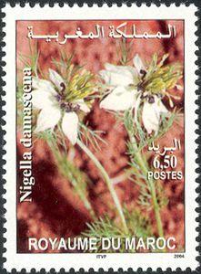 Moroccan-flora---Nigella-damascena