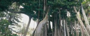 r2_jardin_botanico_orotava_t3800641.jpg_15509059