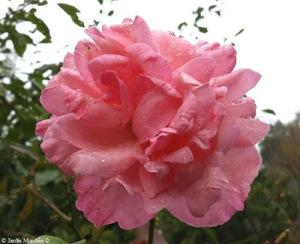 truita-roses-24-09-2016