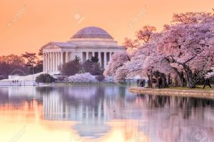 34637509-el-Jefferson-Memorial-durante-el-Festival-de-los-Cerezos-en-Flor-Washington-DC-Foto-de-archivo