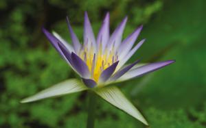 51898_fullimage_hortus_botanicus,_leiden_560x350_492x307