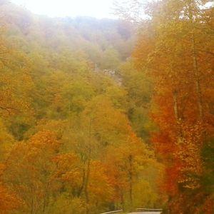 ada 10 otoño