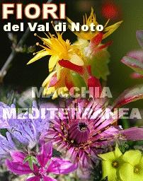 fiori-mediterranei
