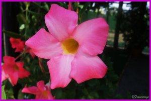 flora murcia alcantarilla