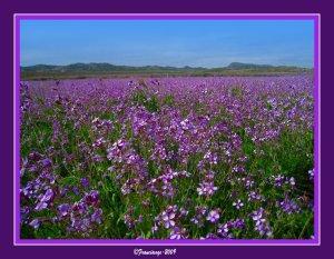 flora murcia