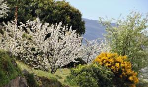 fotos-extremadura-valle-jerte-cerezos-flor-023