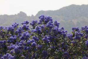 Jardin lirios y rosas Benissa (16)