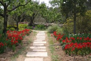 Jardin lirios y rosas Benissa (8)