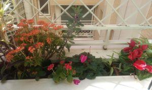jardinera nogales 2