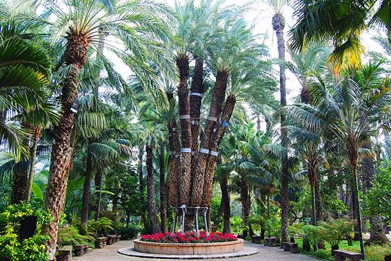 Descubriendo jardines ii el huerto del cura elche - Imagenes de jardines con palmeras ...
