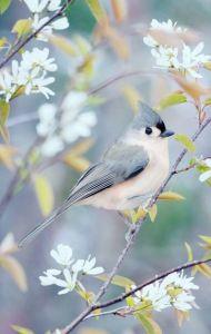 pájaros y flores más