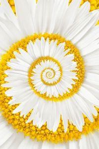 flor bellísima