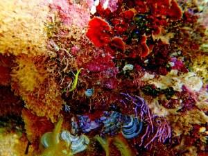 flores marinas 7