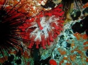 flors marinas 5