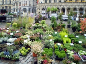 grand-place-flores
