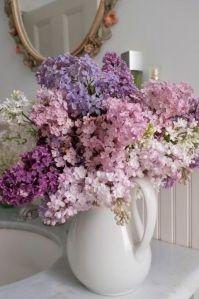 lilas jarra