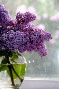 lilas jarrón agua