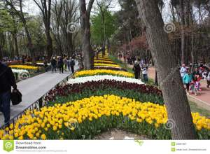 tulip-festival-emirgan-park-istanbul-turkey-held-month-nisan-every-year-beautiful-tulips-each-other-53097907