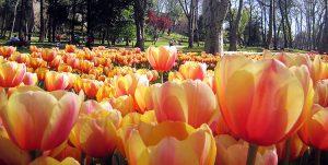 tulips-emirgan-park-istanbul-01