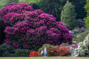 Summer-in-the-Gardens-680x455