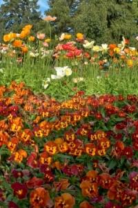 15540679-australiano-queensland-suroriental-atraccion-turistica-de-las-flores-de-carnaval-toowoomba
