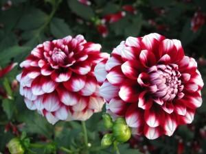 falia-flor-nacional-mexico2-600x450