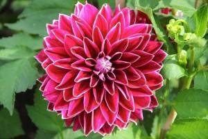 falia-flor-nacional-mexico4-600x400