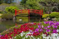 QB0091 Japanese Gardens Toowoomba _DSC9663