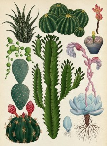botanicum-katie-scott-1-800