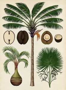 botanicum-katie-scott-3-800