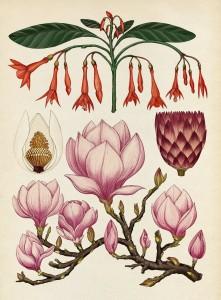 botanicum-katie-scott-5-800