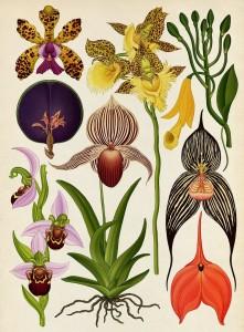 botanicum-katie-scott-6-800